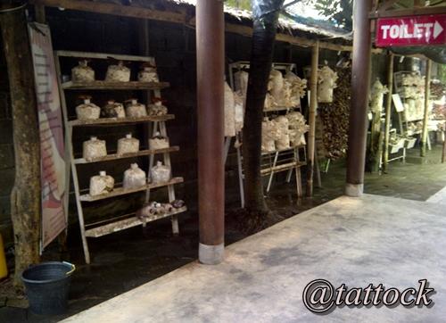 Budidaya jamur. Pengunjung bisa melihat dari dekat, jamur-jamur yang bisa disulap jadi berbagai aneka menu. Rak-rak jamur ini terletak di koridor yang menghubungkan ruang makan di belakang.